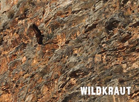 DGT Köln Wildkraut
